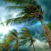 Tropical Storm Rain Sounds (75 Minutes)