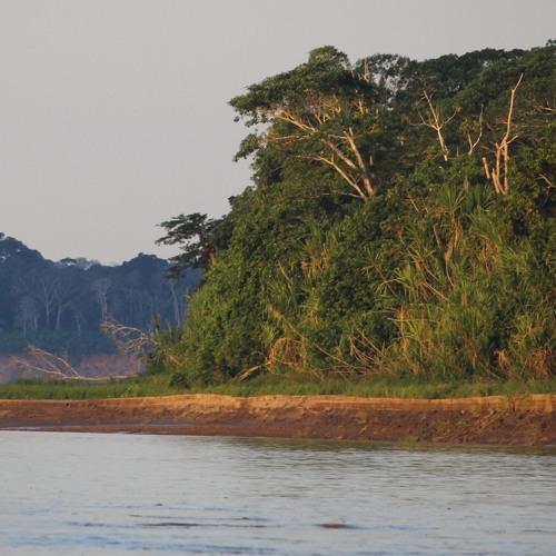 Reserva Nacional Tambopata (July 6th, 2018, Perú)