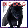 BO$S Chav Ft Tone Diesel - BIG DOG (prod. Leeboy)