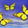 Chasing Butterflies (Vocals Lyrics McCarty, Soundtrack:Jeremy Blake)