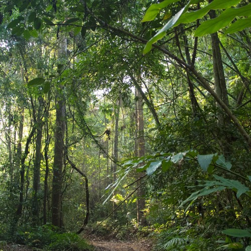 Thung Yai - Hill Evergreen Forest in Thailand's Western Forest Complex
