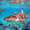 Sharks Dark Cinematic Background Music – Music Bay | Royalty Free Music