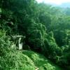 Jungle (Future Bass track)