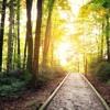 MISSION UPDATE_A Parish Path