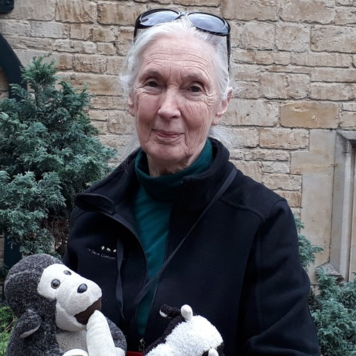 Wild Voices: Revolutionising our understanding of chimpanzees, Dr Jane Goodall