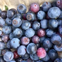 Brilliant Blueberries