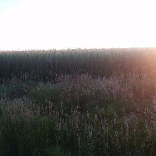 Nebraska Farmer Rick Larson, Part 2; then, Spreading Kindness Around the World; plus, Elaine Weiss