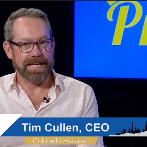 Investing in the Marijuana Industry W/Tim Cullen CEO of Colorado Harvest Company