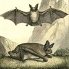 The Bat-Loving Naturalists Translating the Silent Language of the Night