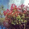FREE INSTRUMENTAL 003: Tree Of Lyfe