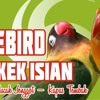 #6 Suara Lovebird Ngekek Isian ( Kenari, Cucak Jenggot, Kapas Tembak)