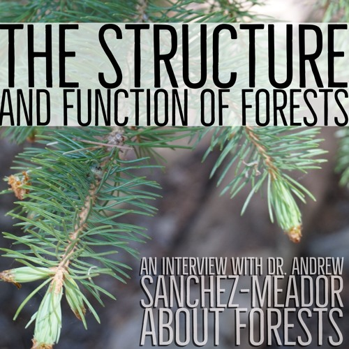 The structure and function of forests