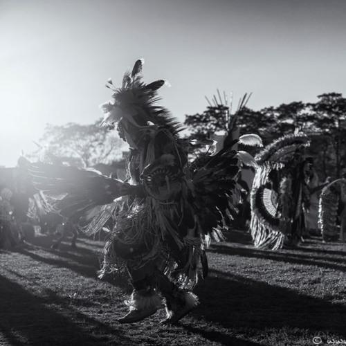 Tiger Tribe | POW WOW #1