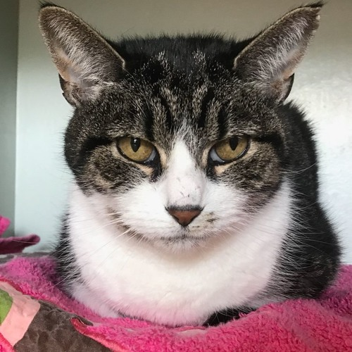 Cape Country 104's Waggin' Wednesday: Lovey is a Lovely Older Cat