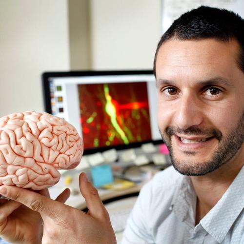 My Latest Findings in Brain Research by David Guzman