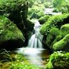 Nature Sound 30mn - Relax Sound Of Water Celtic Harp  Study - Sleep - Meditation