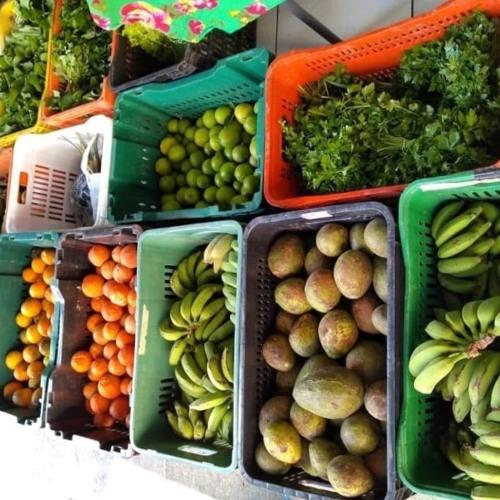 MOMENTO AGROECOLÓGICO - Armazém do Campo de São Paulo inaugura feira de alimentos orgânicos