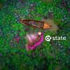 FREE DL: Lana Del Rey - Shades of Cool (Alfa State & Mystic District Edit)