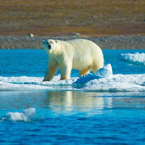 Arctic Science, Put On Ice