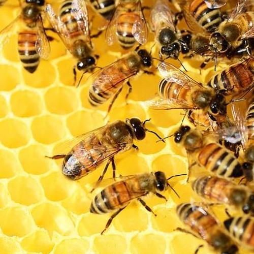 Alimento é saúde: Doce mel: conheça os tipos e vantagens do consumo