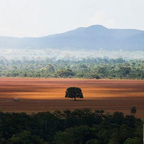 Ambientalistas apresentam agenda prioritária a candidatos