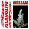 #ISLANDLIFE VOL.8 - 88888888