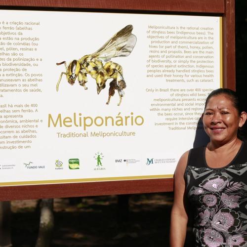Abelhas melhoram produção de frutas em reserva extrativista no Oeste do Pará