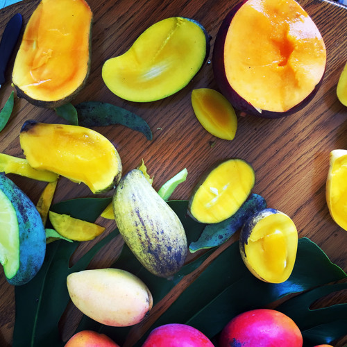 Mango Mania: How the American Mango Lost its Flavor—And How it Might Just Get it Back