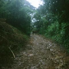 John T. Gast - UVC Roots & Destruction