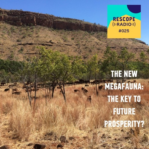 #025 The New Megafauna: The key to our future prosperity? With Chris Henggeler from Kachana Station