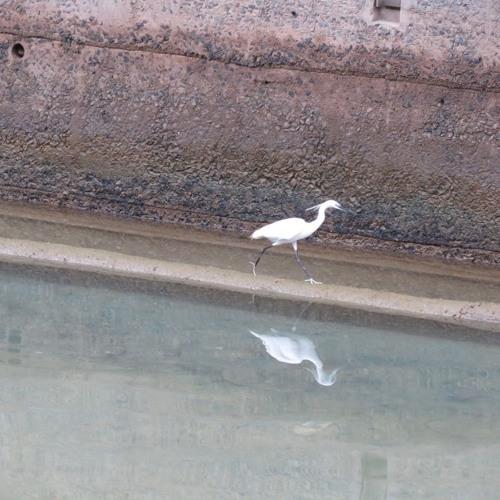 180306 - BirdmktHKsm