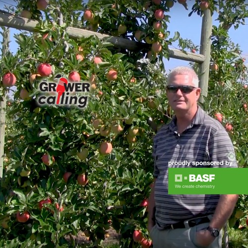 Hank Markgraf reviews aphid control in apples