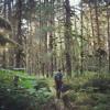 3 Birds Songs in the rainforest of Alaska