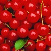 Kaloy - Cherry