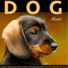 Music For Dogs (While Away)