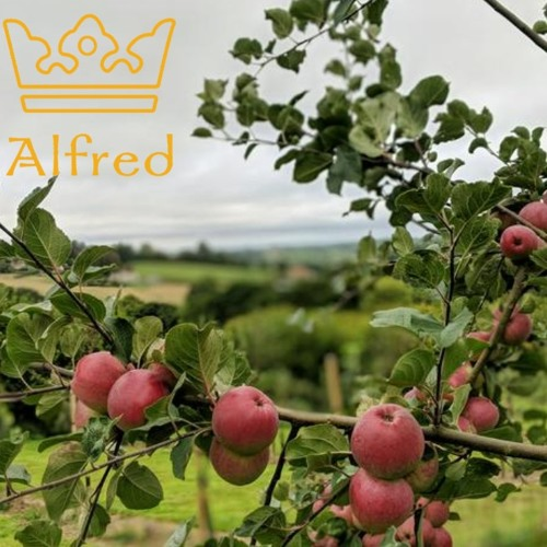 Apple Pressing In Donhead St Mary