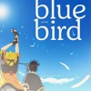 Blue bird / Ikimono gakari (Acoustic live band cover)