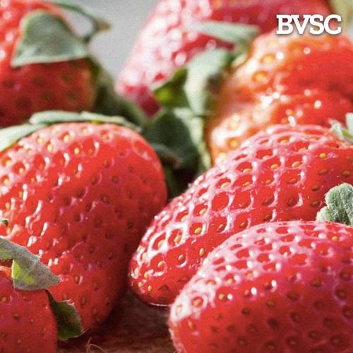 EPISODE 66: Strawberry Needle Hysteria