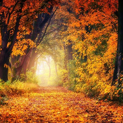 Autumn Passages