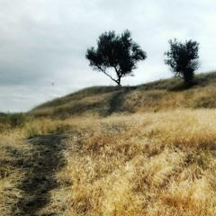 пустые земли