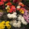 La primavera aún no llegó a la industria de las flores Portada del disco
