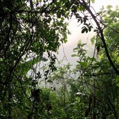 Arroyo ojo de agua / Tuxpan de Bolaños