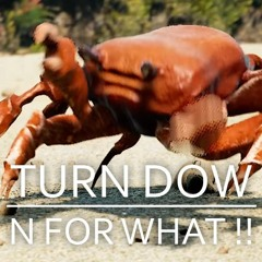 Turn Down For Crabs