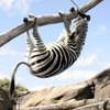 London - Rat Trap - Can't Stop (zebra smashup)