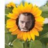 Sun Flower - Post Malone [Extended]