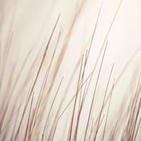 Porya Hatami - White Forest (Purl Remix)
