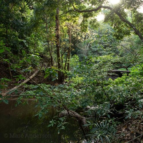 Kutini-Payamu (Iron Range) National Park, Australia - A Biodiversity Hotspot
