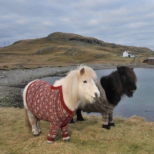 65. Fashion In Focus: Fair Isle Sweater