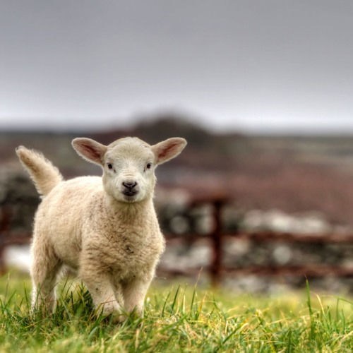 Behold The Lamb - Part 2 of 3