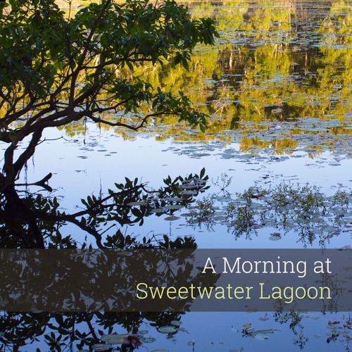 'A Morning at Sweetwater Lagoon' - Album Sample